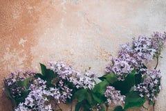 Ramas de la lila en el fondo imagen de archivo libre de regalías
