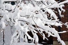 Ramas de la nieve Imágenes de archivo libres de regalías