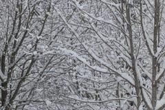 Ramas de la nieve Fotos de archivo libres de regalías