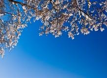 Ramas de la nieve del invierno del árbol en fondo del cielo Foto de archivo libre de regalías