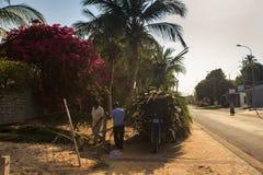 Ramas de la palma de la carga de los hombres en la carretilla en el borde de la carretera del pueblo Foto de archivo libre de regalías