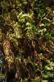 Ramas de la palma del trenzado de la mala hierba de la liana imagen de archivo libre de regalías