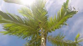 Ramas de la palma en el viento Luz del sol Resplandor del sol Cielo azul metrajes