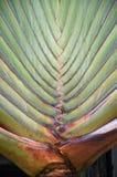 Ramas de la palma a lo largo de la forma del tronco un modelo abstracto fotografía de archivo