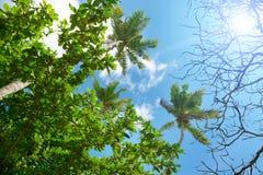 Ramas de la palmera contra el cielo azul hermoso Fotos de archivo libres de regalías