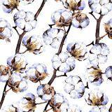 Ramas de la planta de algodón Relanzar el modelo watercolor Foto de archivo libre de regalías