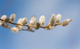Ramas de la primavera Imágenes de archivo libres de regalías
