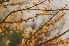 Ramas de la primavera con las nuevas hojas Fotos de archivo