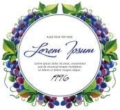 Ramas de la uva de vino de la plantilla de la etiqueta del vector con Imagen de archivo libre de regalías