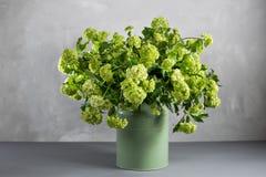 Ramas de las bayas del viburnum de las flores en cubo verde Fotos de archivo