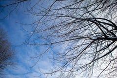 Ramas de los árboles cubiertos con nieve Imagen de archivo libre de regalías
