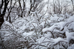 Ramas de los árboles cubiertos con nieve Imagenes de archivo