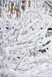 Ramas de los árboles cubiertos con nieve en primavera en abril Foto de archivo