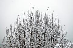 Ramas de los árboles cubiertos por la nieve fotografía de archivo