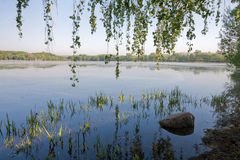 Ramas de los árboles de abedul que lloran que cuelgan sobre el agua El lago en el amanecer Fotos de archivo