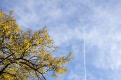 Ramas de los árboles del otoño con las hojas amarillas y rojas, azul nublado Imagen de archivo