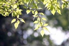 Ramas de los árboles que cuelgan abajo debajo del sol Foto de archivo