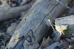 Ramas de los árboles que mienten en la tierra en el bosque Fotos de archivo libres de regalías