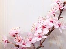 Ramas de los ciruelos del flor en una tabla de madera fotografía de archivo