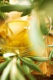 Ramas de olivo Imágenes de archivo libres de regalías