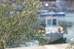 Ramas de olivo y barcos Imagenes de archivo