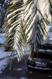Ramas de palmera cubiertas con la nieve Atenas, Grecia, el 8 de enero de 2019 fotografía de archivo