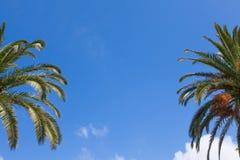 Ramas de palmera sobre un cielo azul claro Fotos de archivo libres de regalías
