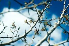 Ramas de peral contra el cielo azul imagen de archivo libre de regalías