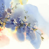 Ramas de Sakura en fondo de la acuarela de la floración Fotos de archivo libres de regalías