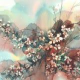 Ramas de Sakura en fondo de la acuarela de la floración Foto de archivo libre de regalías