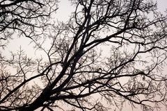 Ramas de un árbol contra el cielo por la tarde Imagen de archivo libre de regalías