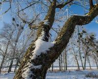 Ramas de un árbol cubierto con escarcha Fotografía de archivo