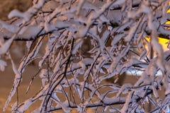 Ramas de un árbol cubierto con nieve fresca Imagen de archivo libre de regalías