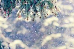 Ramas de un árbol de navidad con nieve que cae Imagen de archivo libre de regalías