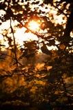 Ramas de un árbol en la puesta del sol, siluetas oscuras en el fondo de los colores ambarinos fotos de archivo libres de regalías
