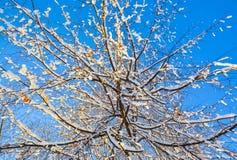 Ramas de un árbol en la sol de la primavera foto de archivo