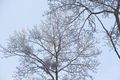 Ramas de un árbol en una helada en un fondo del cielo/ imagenes de archivo