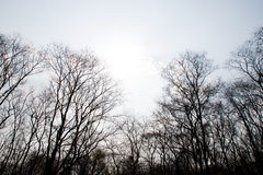 Ramas de un árbol sin las hojas en bosque de la sequía Foto de archivo