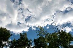 Ramas de un abedul en un fondo de un cielo azul Fotos de archivo