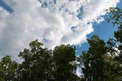 Ramas de un abedul en un fondo de un cielo con las nubes Fotos de archivo