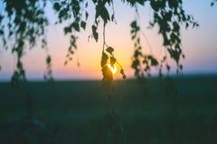 Ramas de un abedul en un fondo de una salida del sol Imágenes de archivo libres de regalías