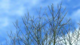 Ramas de un sauce contra el cielo de la primavera almacen de metraje de vídeo