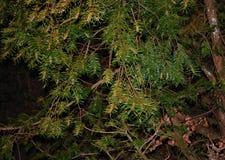 Ramas de una creación de la demostración del árbol y de una belleza de la naturaleza fotos de archivo