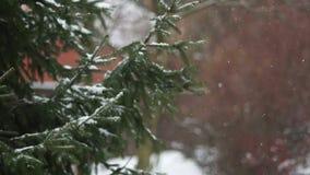 Ramas de una picea nevada en el parque contra la perspectiva de la pared Caídas de la nieve Copie el espacio a la derecha almacen de metraje de vídeo