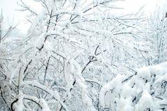 Ramas debajo de la nieve Fotografía de archivo
