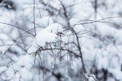 Ramas debajo de la nieve en bosque del invierno Fotos de archivo libres de regalías