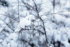 Ramas debajo de la nieve en bosque del invierno Foto de archivo