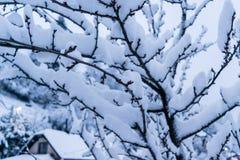 Ramas debajo de la nieve en un día de invierno Foto de archivo