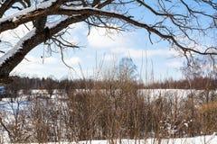 ramas del árbol de abedul viejo sobre el barranco en invierno Fotos de archivo libres de regalías