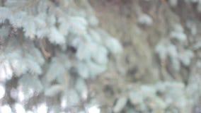 Ramas del árbol en parque del invierno metrajes